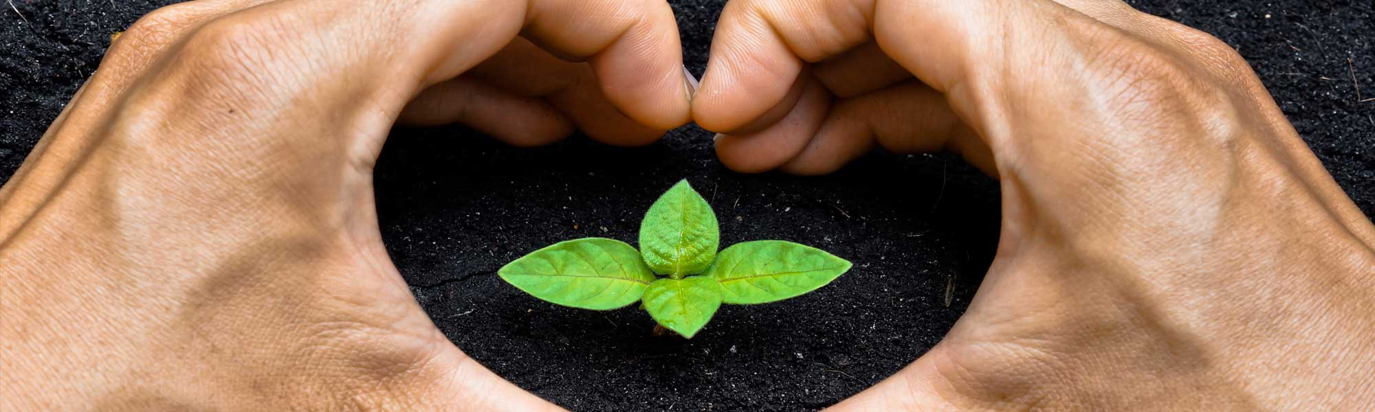 hearts around small plant. recycling saves the planet