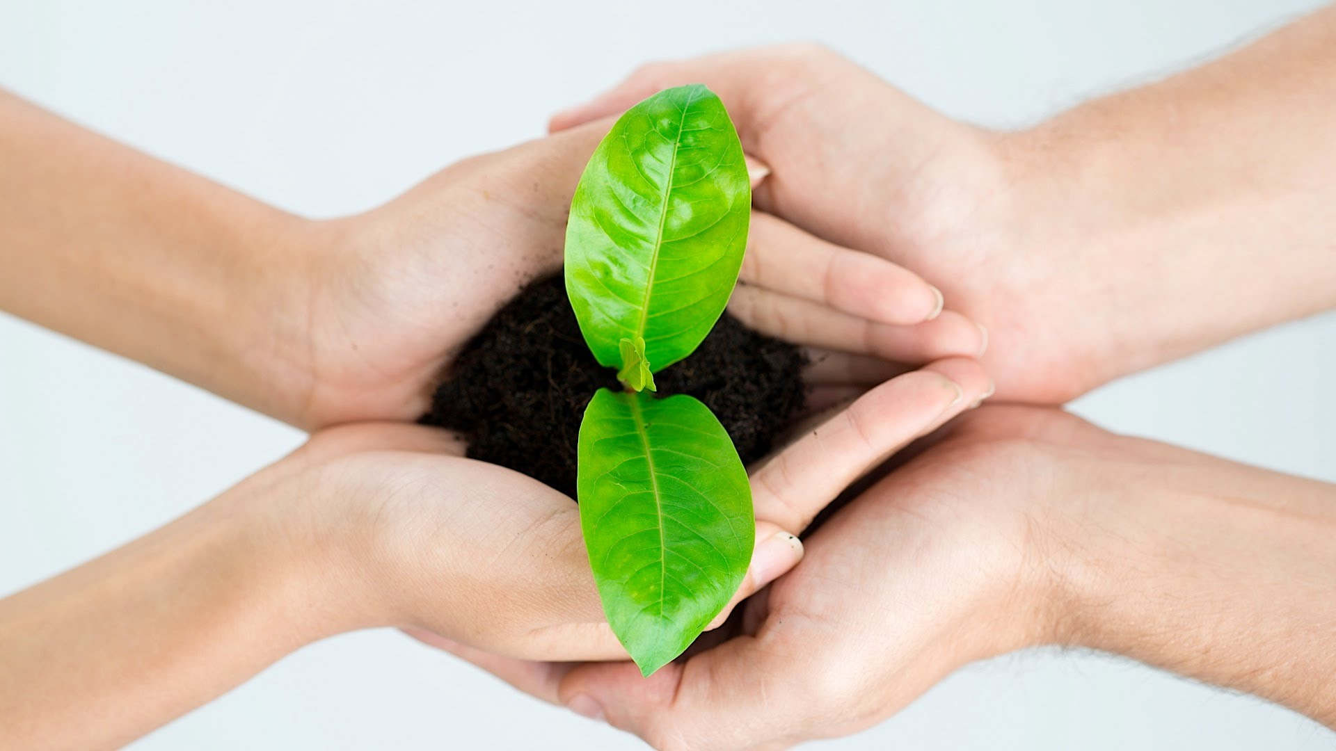 two people holding a small plant in dirt who recycle