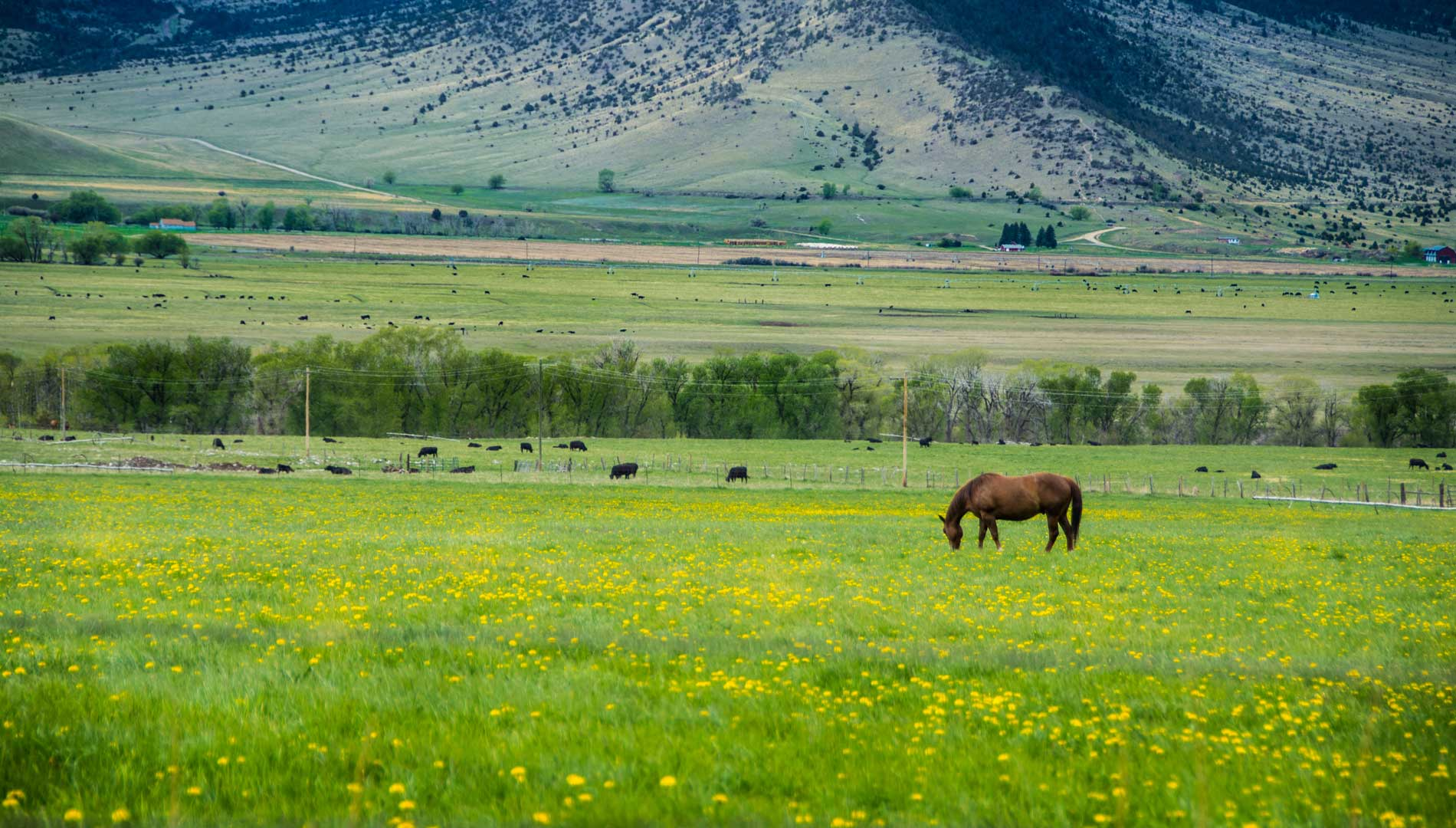 Field with horse in Butte, Montana