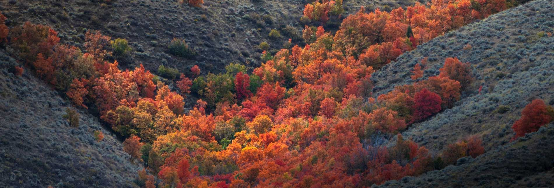 trees on mountainside near pocatello in the fall