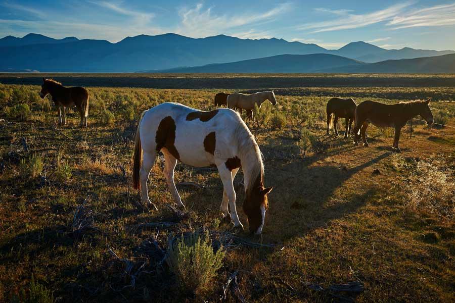 horse grazing on Idaho plains field