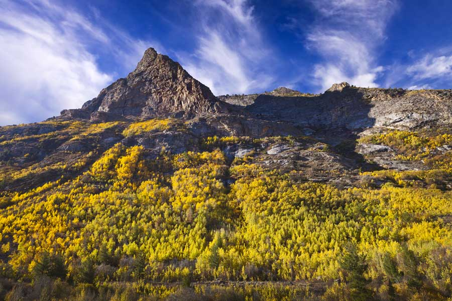 Mountain with trees during the fall in Nevada