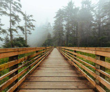 Bridge into a forest with fog