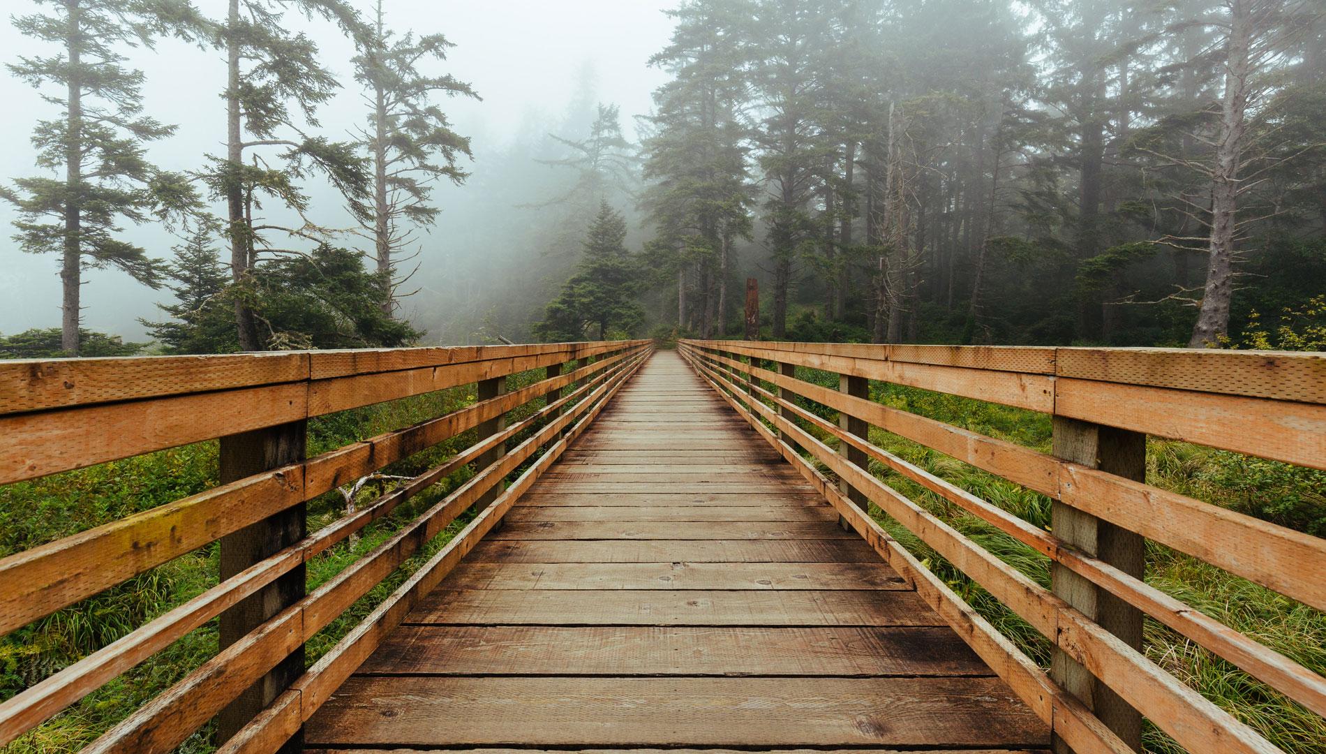 bridge in forest on foggy day in Washington